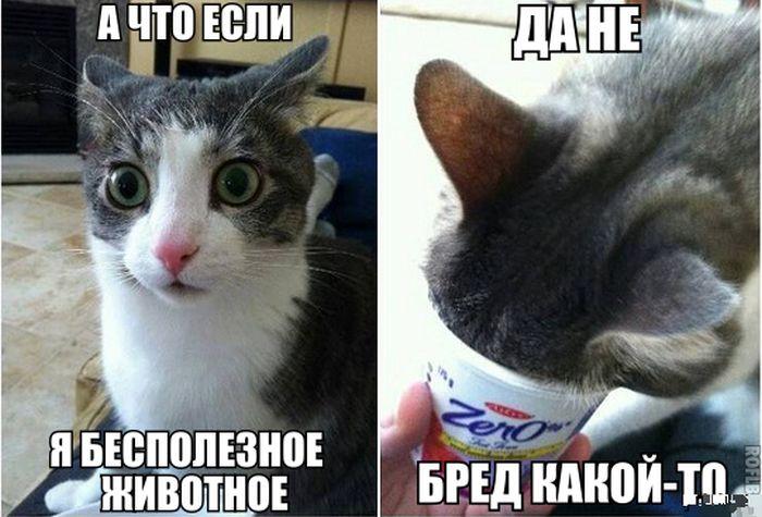 Беременная кошка или нет если она много ест
