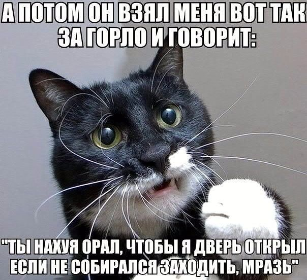 https://www.balancer.ru/cache/sites/com/ya/yaplakal/s00/pics/pics_original/4/7/4/640x640/10168474.jpg