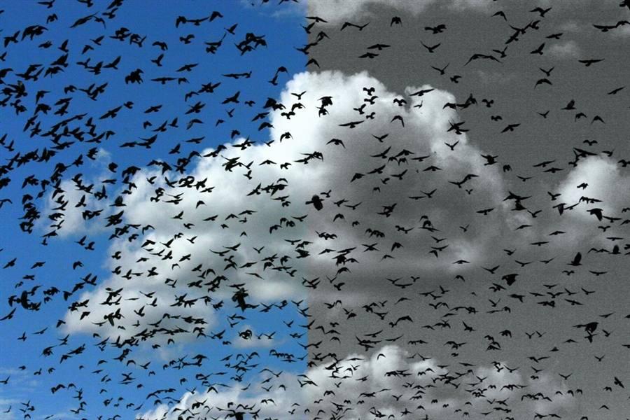 к чему снится стая птиц над головой днем рождения Композицию